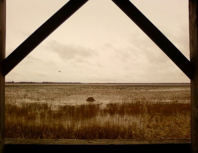 View of a large, open yellow-grass-covered wetland area, outlined by a wooden window frame.