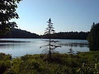 Scenic view of a lake, a lone pine in the foreground.
