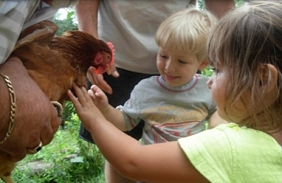 Kids petting a chicken