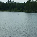 Loon floating in the distance on Hemlock Lake 2