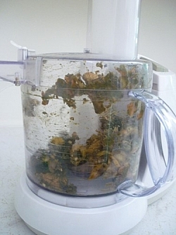 Food processor full of partially-decomposed food.