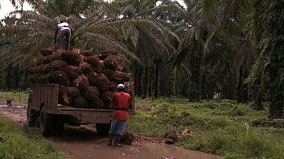 "Image from the film ""The Carbon Rush"": A truck in the rainforest, showing the effects of deforestation."