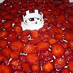 Sliced strawberries on a dehydrator tray