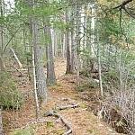 A typical natural trail at Mashkionje Provincial Park (here along the Coastal Trail).