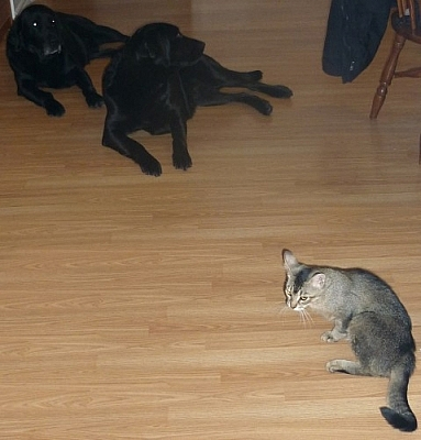 Dogs and cats chilling in the dining room.