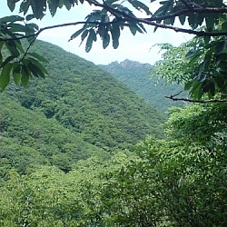 Lush verdant scenery from Naejangsan National Park.