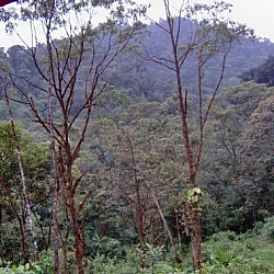 One of the views from the volunteer house at Merazonia shows a forested mountain rising behind the jungle.