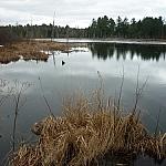 Wetland along Atakas Trail in Mashkinonje Provincial Park.