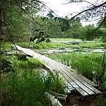 A narrow wooden boardwalk crosses through a marshy area along the Eastern Pines backpacking trail.