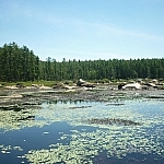 Large boulders are visible beyond a marsh, lily pads floating in the foreground.