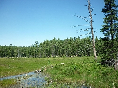 Scenery while backpacking Algonquin Park's Eastern Pines Trail.