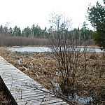 Boardwalk through a marsh on Atakas Trail.