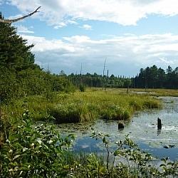 Marsh along Mashkinonje Provincial Park's Atakas Trail