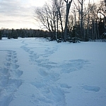 Photo of snowshoe tracks in a field, taken just in time for this snowshoeing hit list!