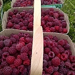 Close-up of full baskets of raspberries lined up in a row one behind the other.