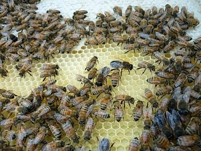 Bees at Creekbend Farm