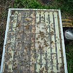 Bees in the box system at Creekbend Farm.