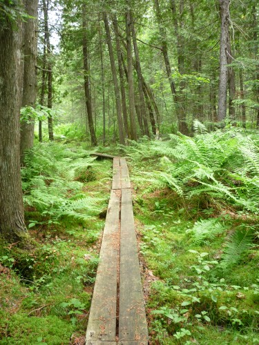 Boardwalk while hiking the History Loop on Etienne Trail in Samuel de Champlain Park.