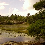 The typical wetland scenery that can be viewed while visiting Mashkinonje Provincial Park.