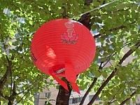 At Buddha's birthday, lanterns decorate the streets of Busan, South Korea.