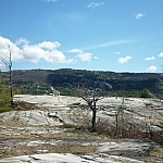 Barren, windswept trees atop the La Cloche Silhouette Trail.