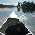 Our black lab Maggie curled up in the front of the canoe.