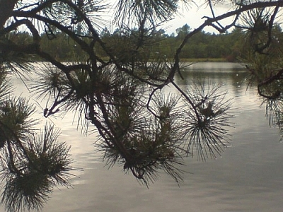 View of Lake Nipissing through pine branches.