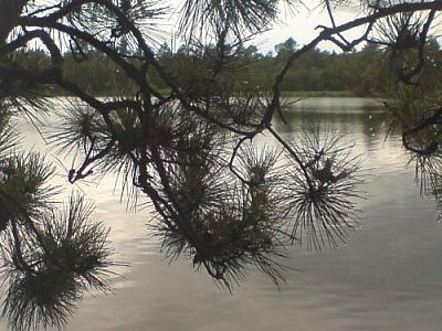 View of Lake Nipissing through pine branches.