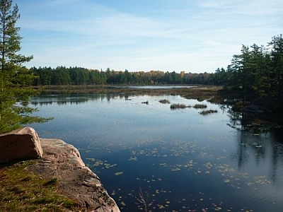 View of the Cranberry Bog, a bit of pink granite rock visible in the foreground.