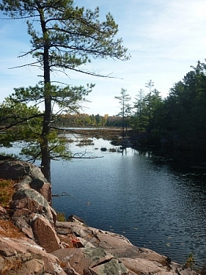 A lone pine stands on pink granite before the Cranberry Bog.