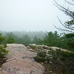 Foggy forest scenery from Killarney's East Lighthouse Trail.