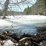 Ice-level (water-level?) view of a small lake from just below a beaver dam.