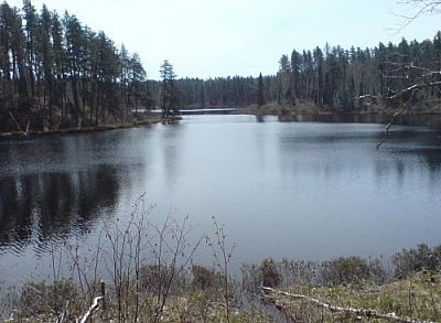 Spring scenery while hiking in Ontario at Esker Lakes Provincial Park.