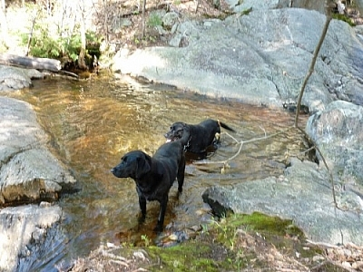 Fetcher and Maggie swimming in Killarney Provincial Park.