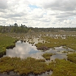 A vast wetland area spotted with tall grasses, clouds reflecting on the water.