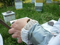 A bee sits on Tracy's hand.