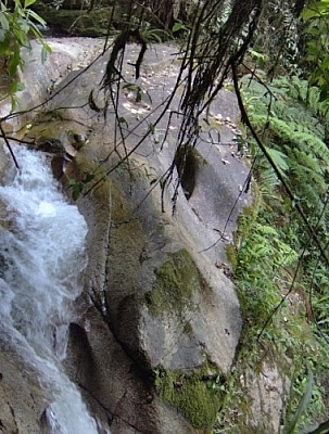 This rock, which resembles a jaguar's face, was seen by a vivid imagination while hiking near Loja at Parque Nacional Podocarpus.