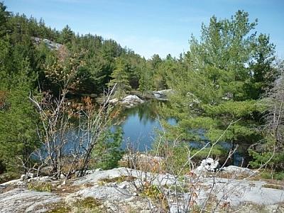 Northern bush land seen while trekking Killarney's La Cloche Silhouette loop trail