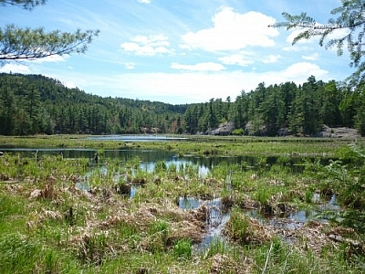 Gorgeous views of wetlands while hiking the La Cloche Silhouette Trail