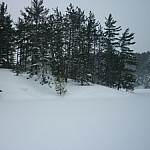 Snow-covered trees lining the shoreline of the Lake Above in French River.