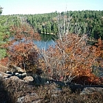 A dead tree's red leaves partially hide Lake of the Woods from view.