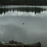 A loon swims on Boundary Lake in front of our campsite, our canoe in the foreground.