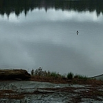Lone loon on Boundary Lake, a rocky shoreline visible in the foreground.