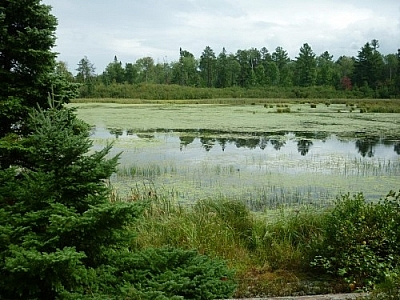 While day-tripping on the shores of Lake Nipissing in Mashkinonje Park, we looped around to Martin Pond.