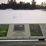 A placard depicting various wetland flowers is the only splash of colour in this vast expanse of white.