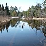 Wetland scenery at Mashkinonje Park.
