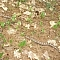 Milk snake seen while hiking on the La Cloche Silhouette Trail in Killarney
