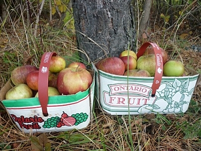 Two baskets of Ontario apples