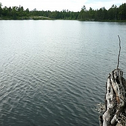 A silvery piece of deadwood juts out towards a small lake along Dokis First Nation's Papase Trail.