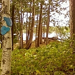 Two blue trail markers on a tree indicate opposite directions to follow on Pebble Beach Trail.